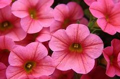 詳細求人情報1(正社員) 花の生産、販売営業、企画営業 [有限会社ジョルディカワムラ]