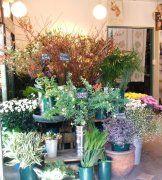 詳細アルバイト求人情報1(アルバイト) 生花販売、接客、配達 [FSカトレア]
